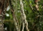 Iguazu- flora