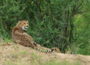Tanzania-FAUNA