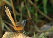 Thailand fauna