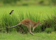 Australia - fauna