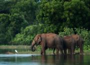 Sri Lanka FAUNA