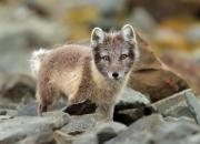 Norway - fauna